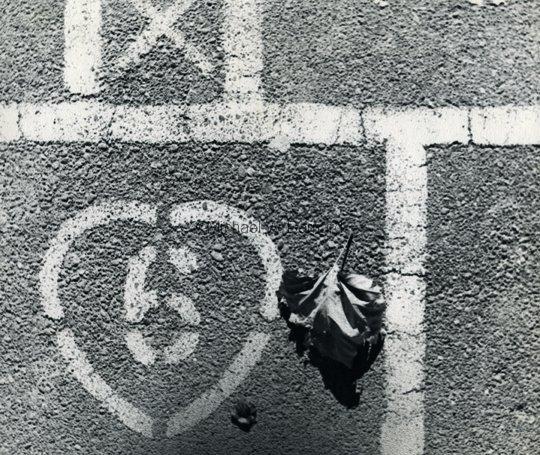 leaf_6photo_1966_corr